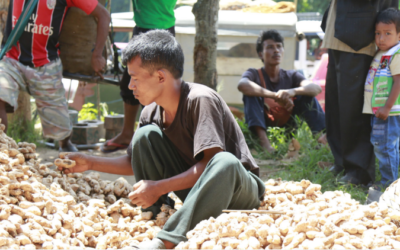 PROMOTION OF FARMER'S PRODUCE THROUGH A VALUE CHAIN EFFORT– THE GINGER STORY